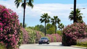 Роскошное вождение автомобиля вдоль дороги при красивые кусты и ладони, приезжая к вилле Стоковое Фото