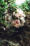 Роскошный bridal букет белых пионов в coniferous кустах Стоковые Фотографии RF