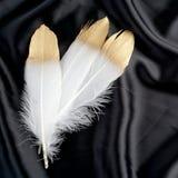 Роскошь позолотила перо лебедя золота золотое белое на черной silk предпосылке ткани Стоковая Фотография RF