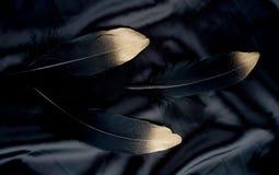 Роскошь позолотила перо черного лебедя золота золотое на silk предпосылке ткани стоковое фото rf