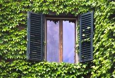 росли окна цвета слоновой кости стены Стоковая Фотография