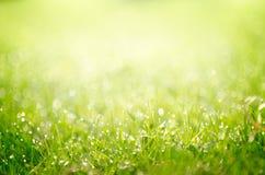 Росная предпосылка травы Стоковое Изображение