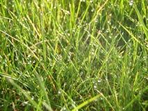 Росная трава стоковое изображение rf