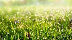 росное утро травы Стоковое фото RF
