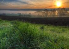 росный восход солнца травы тумана Стоковые Фото