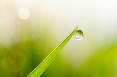 Росный стержень травы Стоковое Изображение