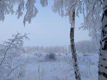 Россия, морозное утро в переулке березы стоковая фотография