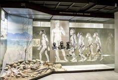 Россия, Москва, 21-ое февраля 2017: Музей Дарвина положения Stuffe стоковое фото