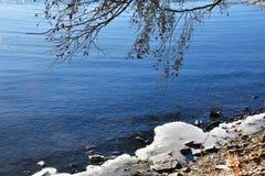 Россия Область Челябинска Хобот дерева, обхватыванный к воде озера Uvildy и ледяного берега стоковая фотография