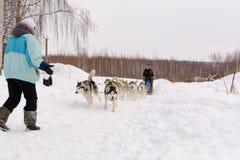 Россия kazan 14-ое февраля Выследите команду скелетона сибирских лайок вне mushing на снеге вытягивая скелетон который из рамки ч Стоковое фото RF