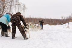 Россия kazan 14-ое февраля Выследите команду скелетона сибирских лайок вне mushing на снеге вытягивая скелетон который из рамки ч Стоковая Фотография