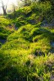 Россыпной лес затопленный с солнечным светом Стоковые Изображения