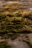 Ростки весны зеленых растений Стоковая Фотография RF
