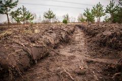 Ростки дерева засаженные в лесе среди больших деревьев Стоковая Фотография