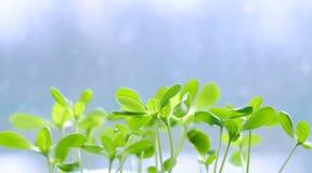Ростки зеленого растения Стоковые Изображения