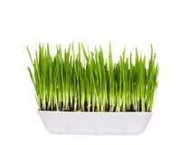 ростки контейнера зеленые пластичные молодые Стоковое Изображение RF