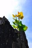 Ростки на пне Стоковая Фотография RF