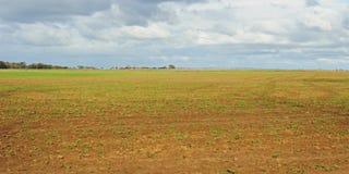 ростки поля капусты стоковые фото