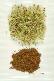ростки семян Стоковые Фотографии RF