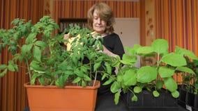 Ростки счастливого зрелого женского садовника моча дома акции видеоматериалы