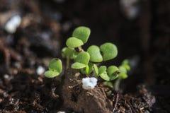 Ростки цветка Стоковое Фото