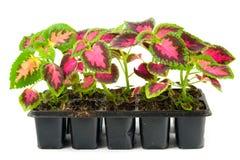 ростки цветков Стоковое фото RF