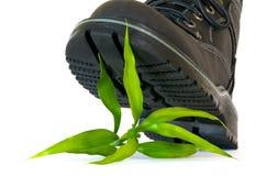 росток ботинка Стоковые Фото