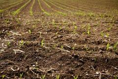росток весны Стоковое Изображение RF