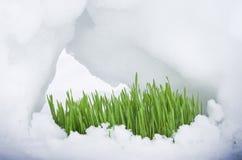 Росток весны Стоковое фото RF