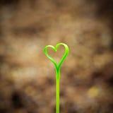 Росток в сердце формы Стоковые Изображения