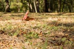 Росток дерева Стоковая Фотография