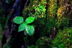 Росток и зеленая предпосылка мха, дерево с зеленым мхом вебсайт обоев пользы tan 2 теней представления приглашения иллюстрации на Стоковое Фото