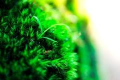 Росток и зеленая предпосылка мха, дерево с зеленым мхом вебсайт обоев пользы tan 2 теней представления приглашения иллюстрации на Стоковые Изображения RF