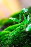 Росток и зеленая предпосылка мха, дерево с зеленым мхом вебсайт обоев пользы tan 2 теней представления приглашения иллюстрации на Стоковое Изображение RF