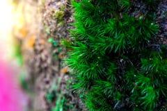 Росток и зеленая предпосылка мха, дерево с зеленым мхом вебсайт обоев пользы tan 2 теней представления приглашения иллюстрации на Стоковая Фотография