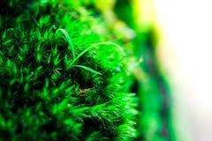Росток и зеленая предпосылка мха, дерево с зеленым мхом вебсайт обоев пользы tan 2 теней представления приглашения иллюстрации на Стоковое Изображение