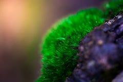 Росток и зеленая предпосылка мха, дерево с зеленым мхом вебсайт обоев пользы tan 2 теней представления приглашения иллюстрации на Стоковые Фотографии RF
