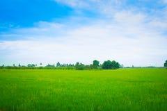 росток крупного плана овоща в утре Стоковая Фотография
