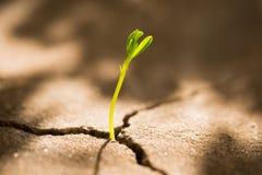 Росток растя из бетона Стоковая Фотография