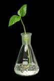 росток склянки Стоковое Изображение RF