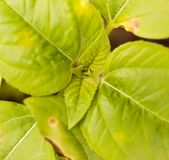 Росток солнцецвета в земле в природе Стоковые Фото