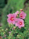 росток цветков стоковая фотография