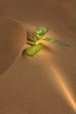 росток Стоковая Фотография RF