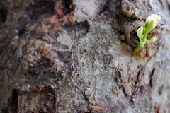 росток Стоковые Изображения RF