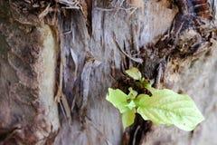 росток Стоковое Изображение