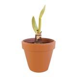 росток flowerpot Стоковое Изображение RF