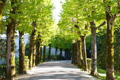Рост весны на деревьях выравнивая дорогу Стоковые Изображения