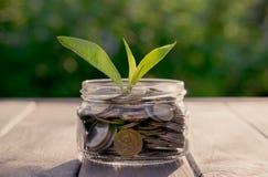 Рост дохода и дела Стоковое Изображение