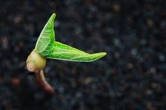 Рост зеленого растения на весеннем сезоне почвы Стоковое Изображение RF