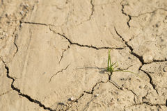 Рост зеленой травы на засушливой области Стоковое Фото